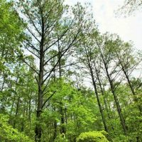 117 Acres of Hunting and Timber Land with Cabin and Pond For Sale in Jones County!