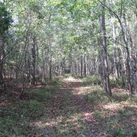 174 Acres of Hunting Land For Sale in Dillon County SC!