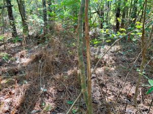 SOLD!  35.76 Acres of Hunting and Timber Land For Sale in Wilson County NC!