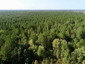 SOLD!! 13.7 Acres of Hunting and Timber Land For Sale in Gates County NC!