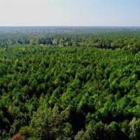 13.7 Acres of Hunting and Timber Land For Sale in Gates County NC!