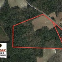 45 Acres of Farm and Hunting Land For Sale in Columbus County NC!
