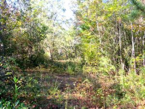 SOLD!!  45 Acres of Farm and Hunting Land For Sale in Columbus County NC!