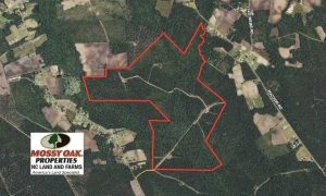 365 Acres of Timber and Hunting Land For Sale in Columbus County NC!
