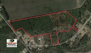 19.26 Acres of Hunting Land For Sale in Robeson County NC!