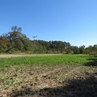 58 Acres of Farm and Timber Land For Sale in Scotland County NC!