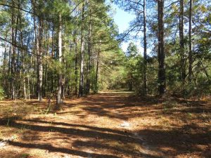 SOLD!!  58 Acres of Farm and Timber Land For Sale in Scotland County NC!