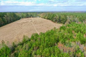SOLD!!  39.63 Ac of Residential Farm and Timber Land for Sale in Columbus Co NC!