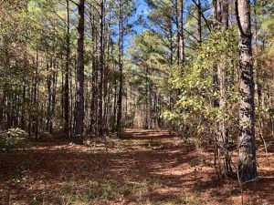 SOLD!!  17.17 Acres of Residential and Hunting Land for Sale in Scotland County NC!
