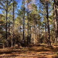 17.17 Acres of Residential and Hunting Land for Sale in Scotland County NC!
