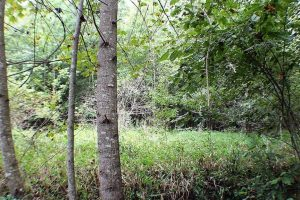 SOLD!  20 Acres of Recreational Hunting Land For Sale in Brunswick County VA!
