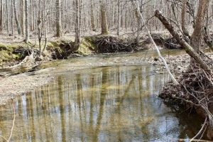 SOLD!  44.5 Acres of Hunting and Recreational Land For Sale in Lunenburg County VA!