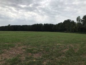 SOLD! 55 Acres of Farm and Timber Land in Columbus County NC!