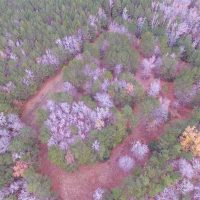 10 Acres of Hunting For Sale in Accomack County VA!