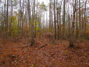 SOLD!!  10 Acres of Hunting For Sale in Accomack County VA!