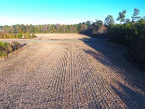 40 Acres of Farm and Timber Land For Sale in Columbus County NC!