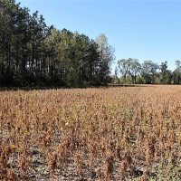 44 Acres of Farm and Timber Land For Sale in Pitt County NC!