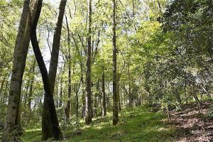 SOLD!!  44 Acres of Farm and Timber Land For Sale in Pitt County NC!