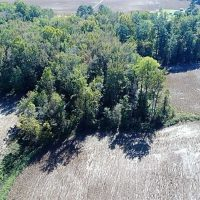 36 Acres of Farm and Timber Land For Sale in Edgecombe County NC!