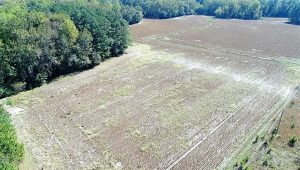 SOLD!!  36 Acres of Farm and Timber Land For Sale in Edgecombe County NC!