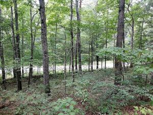 SOLD!!  1 Acre of Hunting Land with Cabin For Sale in Rockbridge County VA!