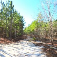 12.25 Acres of Hunting Land For Sale in Scotland County NC!