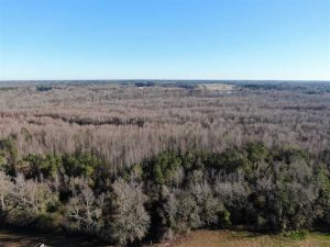 125 Acres of Hunting Land For Sale in Robeson County NC!