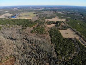 SOLD!!  60 Acres of Hunting Land with Cabin For Sale in Dinwiddie County VA!