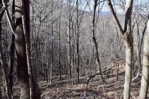 SOLD!!  6 Acres of Hunting and Residential Land For Sale in Franklin County VA!