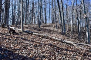 SOLD!!  81 Acres of Hunting and Recreational Land For Sale in Franklin County VA!