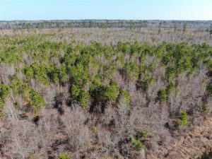 79 Acres of Development Land For Sale in Robeson County NC!