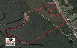 166 Acres of Waterfront Hunting Land For Sale in Gates County NC!
