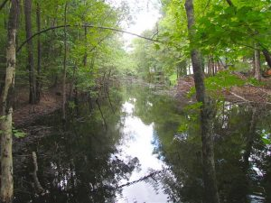 SOLD!!  5 Acres of Waterfront Timber Land For Sale in Isle of Wight County VA!