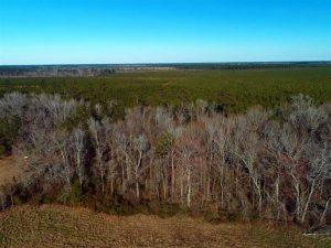 UNDER CONTRACT!!  2.45 Acres of Residential Land For Sale in Pender County NC!