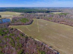 121.43 Acres of Farm and Timber Land For Sale in Edgecombe County NC!