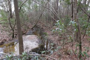 1.1 Acres of Residential Land for Sale in Bladen County NC!