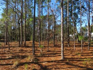 UNDER CONTRACT!! Residential Lot For Sale in Brunswick County NC!