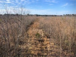 UNDER CONTRACT!! 142.05 Acres of Hunting Land For Sale in Camden County NC!