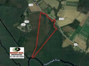 SOLD!! 142.05 Acres of Hunting Land For Sale in Camden County NC!