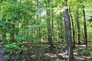 SOLD!!  8.84 Acres of Residential Land For Sale in Dinwiddie County VA!