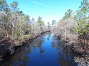 REDUCED! 290.75 Acres of Creek Front Hunting and Timber Land For Sale in Pender County NC!