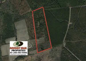 45.13 Acres of Timber and Hunting Land For Sale in Columbus County NC!