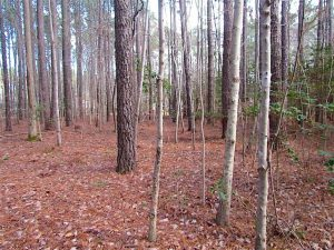 SOLD!!  0.6 Acre Residential Lot For Sale in Isle of Wight County VA!