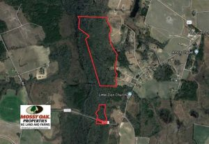 115 Acres of Hunting Land For Sale in Robeson County NC!