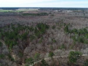 UNDER CONTRACT!! 115 Acres of Hunting Land For Sale in Robeson County NC!