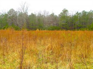 SOLD!!  13 Acres of Hunting Land For Sale in Northampton County VA!