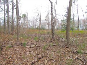 UNDER CONTRACT!!  20 Acres of  Farm and Timber Land For Sale in Accomack County VA!