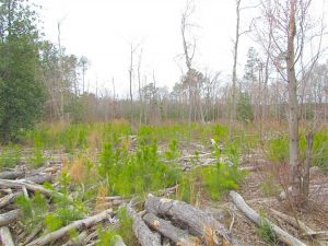 REDUCED!  20 Acres of  Farm and Timber Land For Sale in Accomack County VA!
