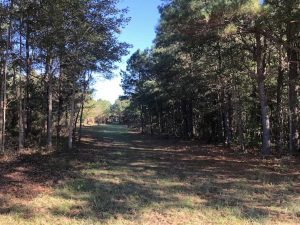 UNDER CONTRACT!!  350 Acres of Farm and Hunting Land For Sale in Columbus County NC!
