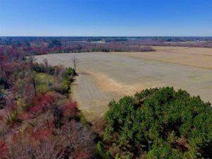 UNDER CONTRACT!!  81.75 Acres of Farm and Timber Land For Sale in Wilson County NC!